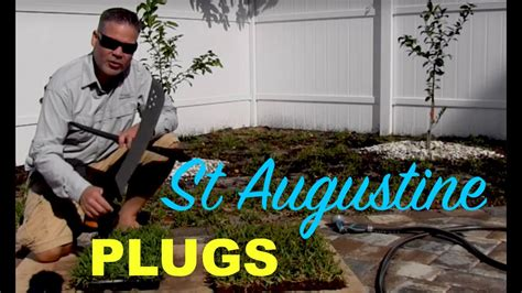 Making St Augustine Grass Plugs From Sod :: Palmetto St