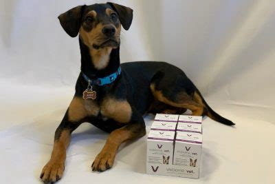 Visbiome for Dogs: What are the Benefits of Giving It to